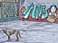 Dog Grafitti. Istanbul. 2012. Digital media. 9